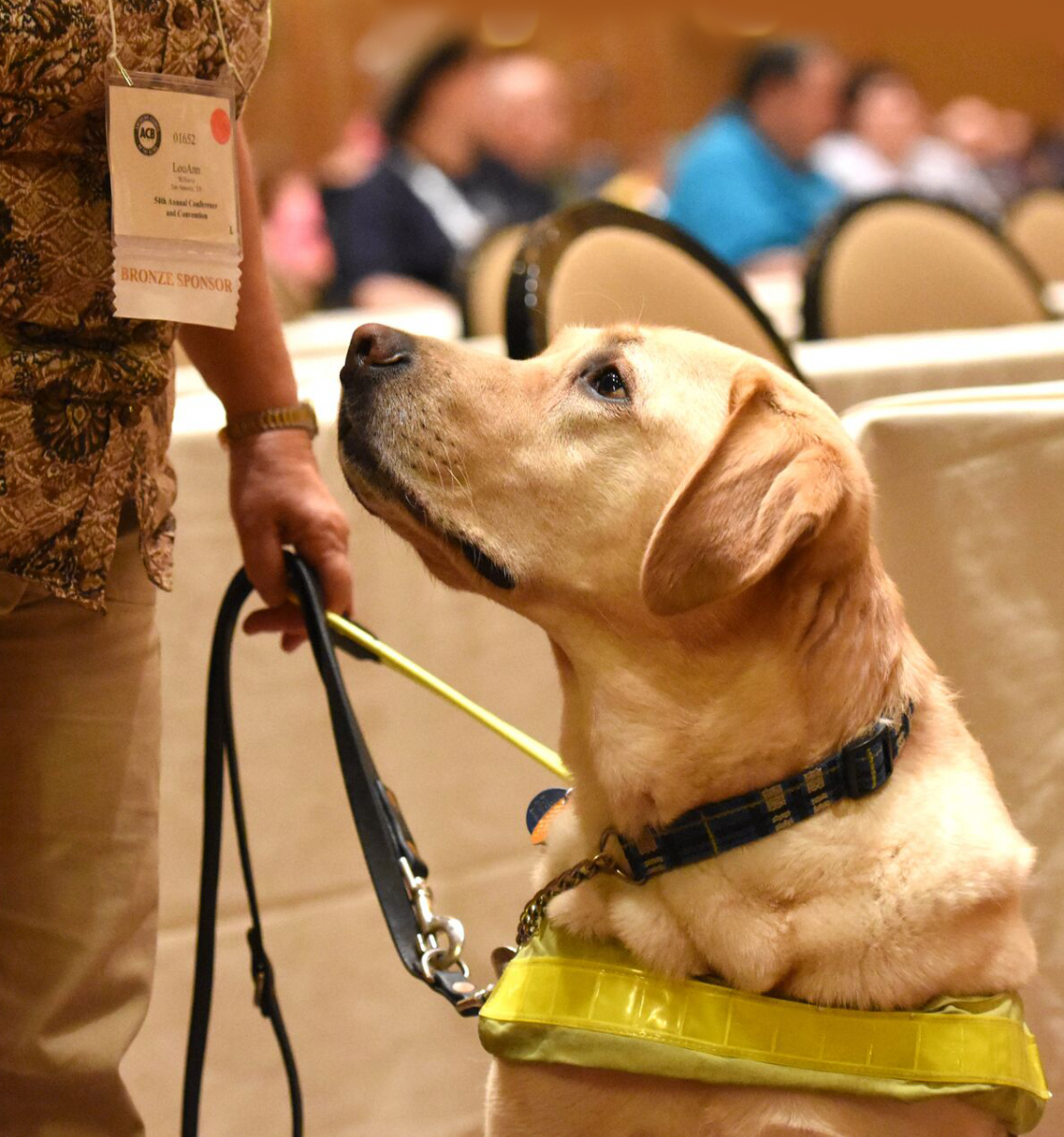 Guide dog offering support